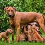 Sverminazione dei cani
